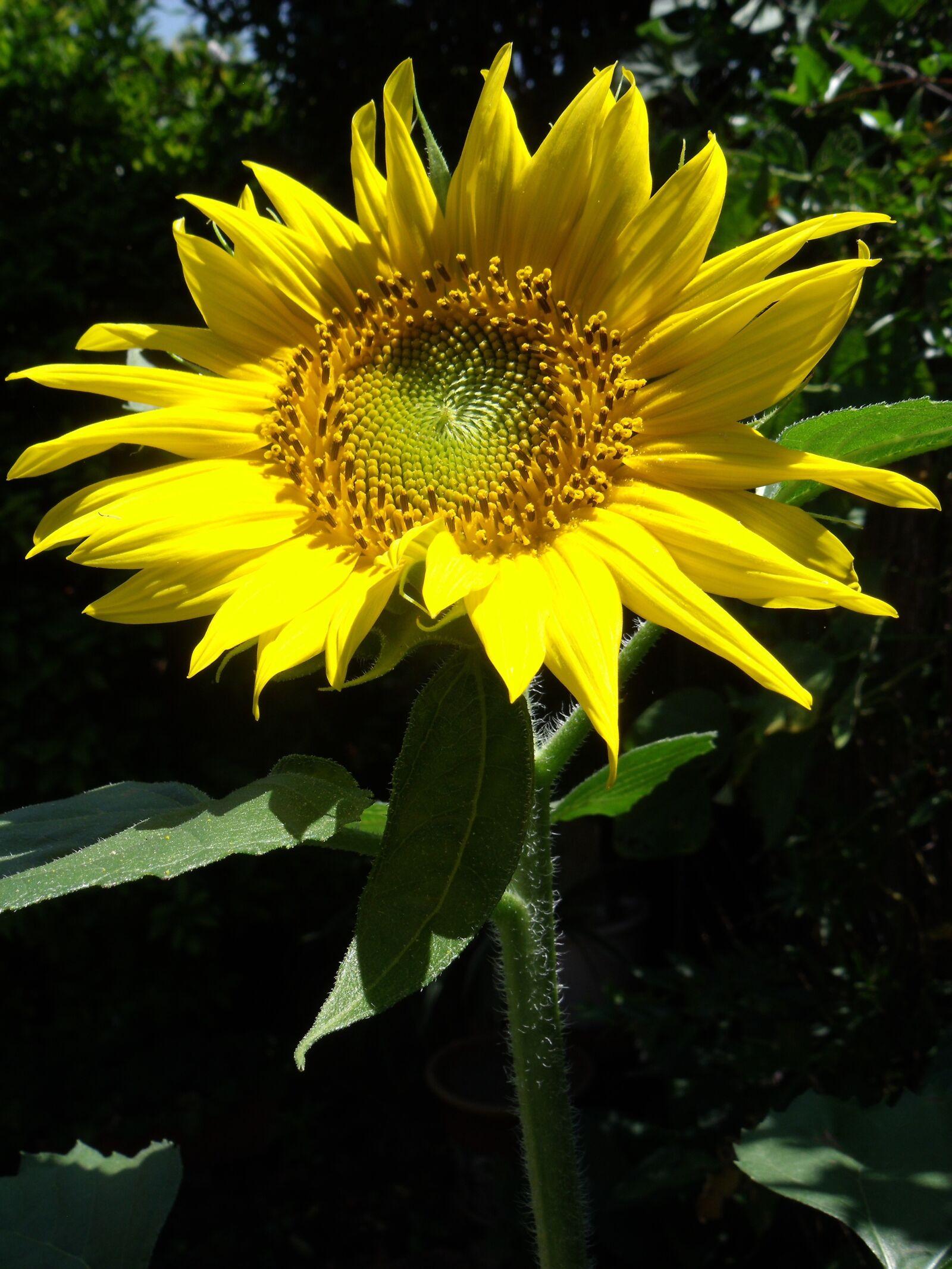 "Fujifilm FinePix J100 sample photo. ""Nature, flora, flower"" photography"