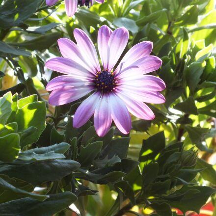 flower, summer, Fujifilm FinePix HS25EXR