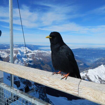 bird, mountains, snow, Nikon COOLPIX AW100