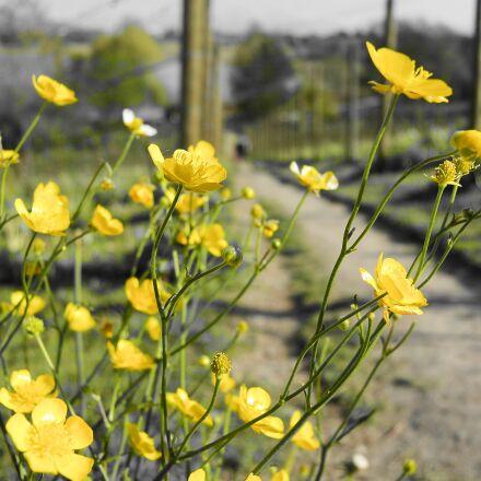 flora, flower, meadow, Nikon 1 S1