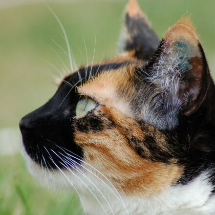 cat, profile, Nikon D50