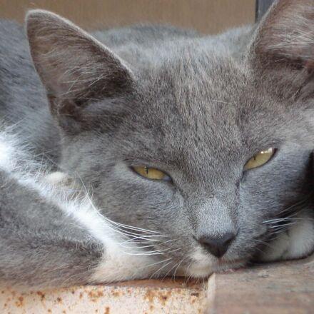 cat, sleep, grey, Sony DSC-W30