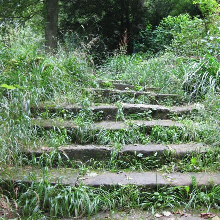 stairs, forest, nature, Canon DIGITAL IXUS 85 IS