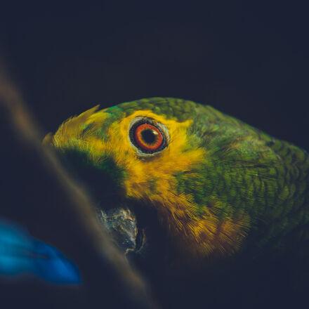 bird, s, eye, birds, Nikon D3200