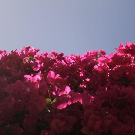 blossoms, bush, california, contrast, Canon EOS 7D