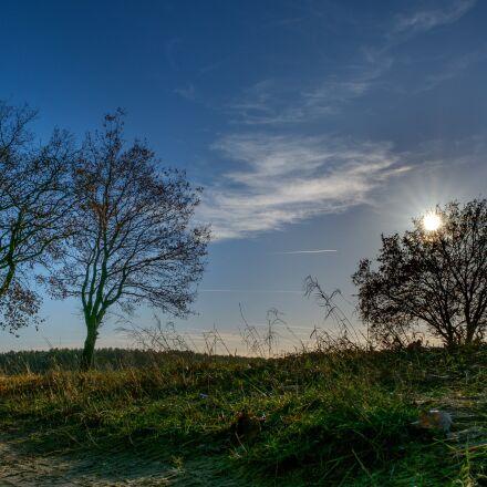tree, sky, blue, Fujifilm X-T2