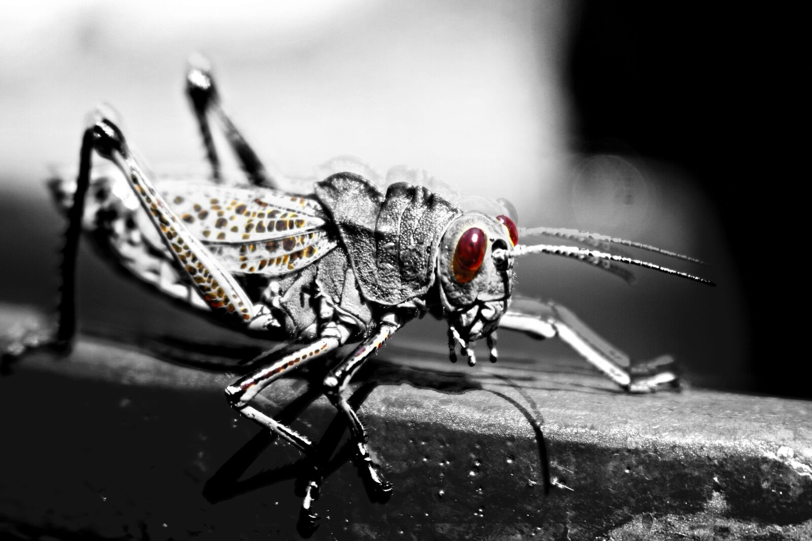 """Canon EOS 7D sample photo. """"Cricket, insect, nature"""" photography"""