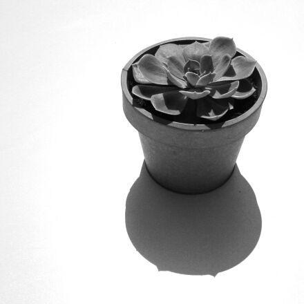 black, and, white, cacti, Canon DIGITAL IXUS 970 IS