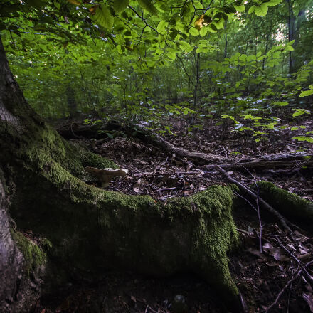 green, leafed, tree, Canon EOS 700D