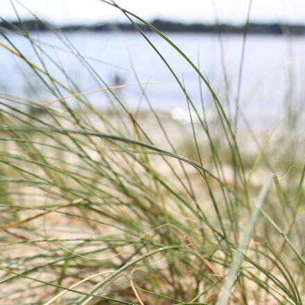 bay, beach, grass, lake, Canon EOS 60D