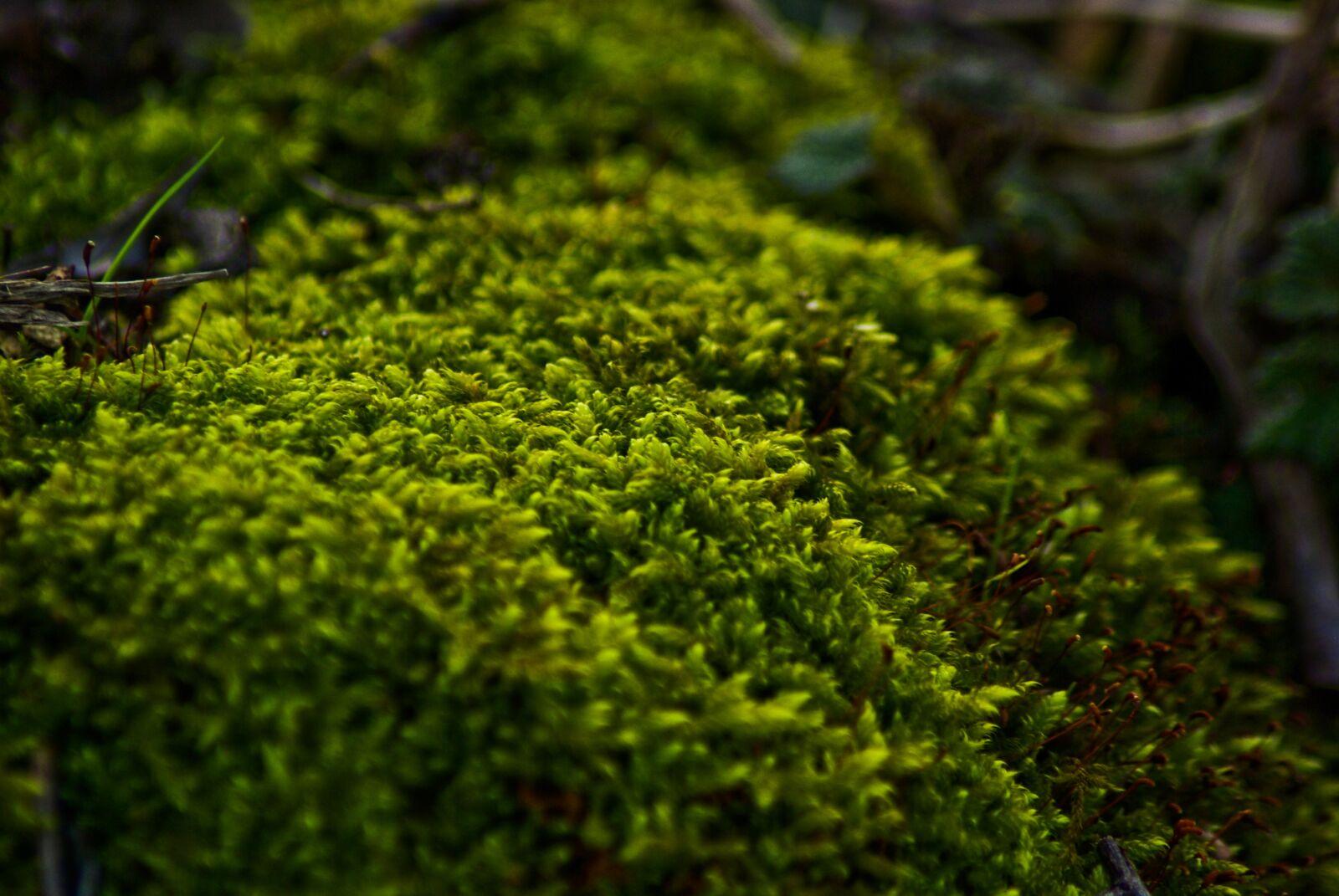 "Pentax K10D sample photo. ""Foam, tree, forest"" photography"