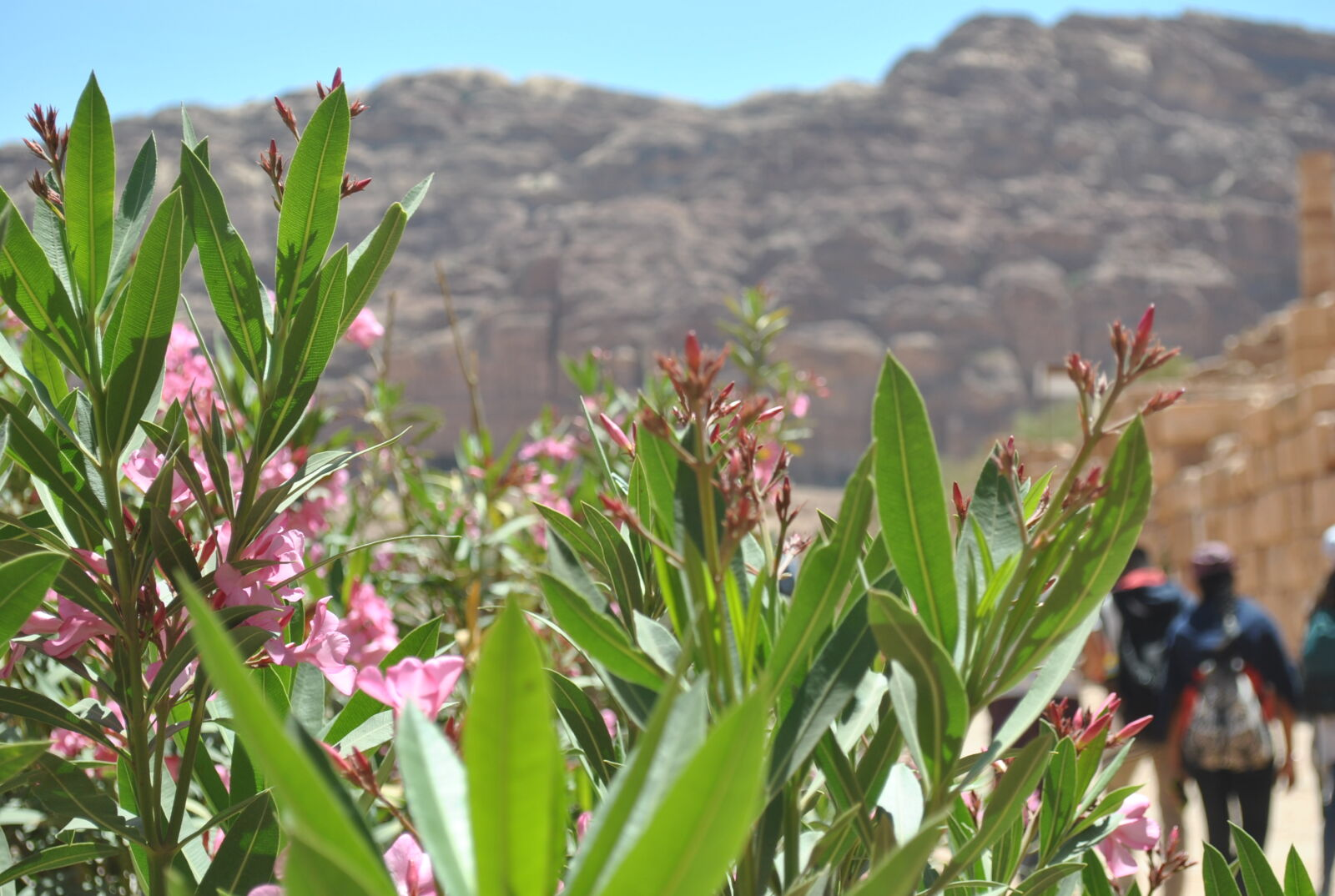 "Nikon D3000 sample photo. ""Amman, beautiful, flowers, jordan"" photography"