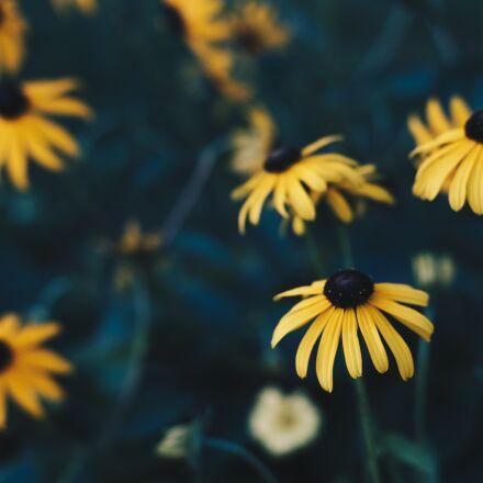 bloom, blooming, blossom, Fujifilm X-Pro2