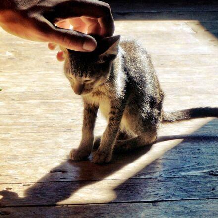 cat, animal, hand, Sony NEX-6