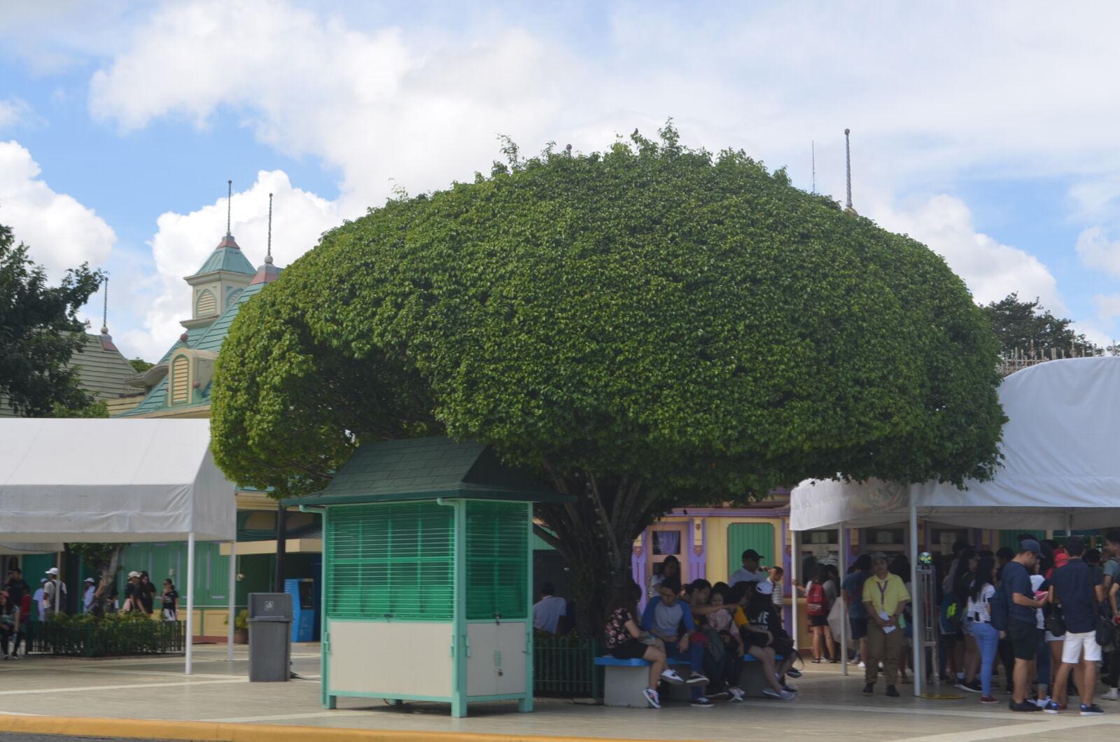 "Nikon D5100 sample photo. ""Green, palm, trees"" photography"