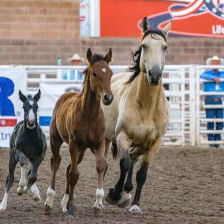 animals, cowboy, equine, foal, Nikon D5300