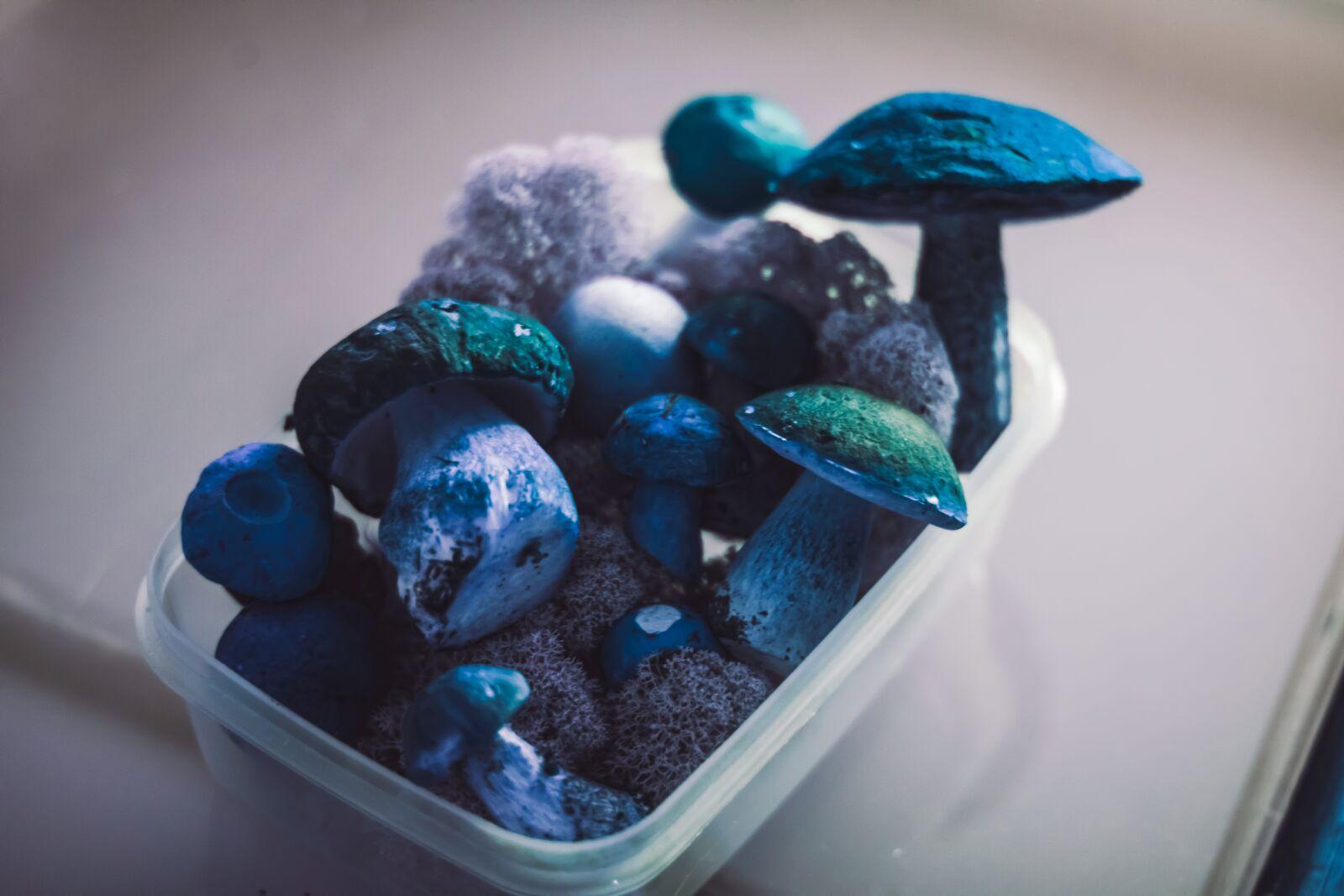 "Canon EOS 760D (EOS Rebel T6s / EOS 8000D) sample photo. ""Mushrooms, fungi, fungus"" photography"