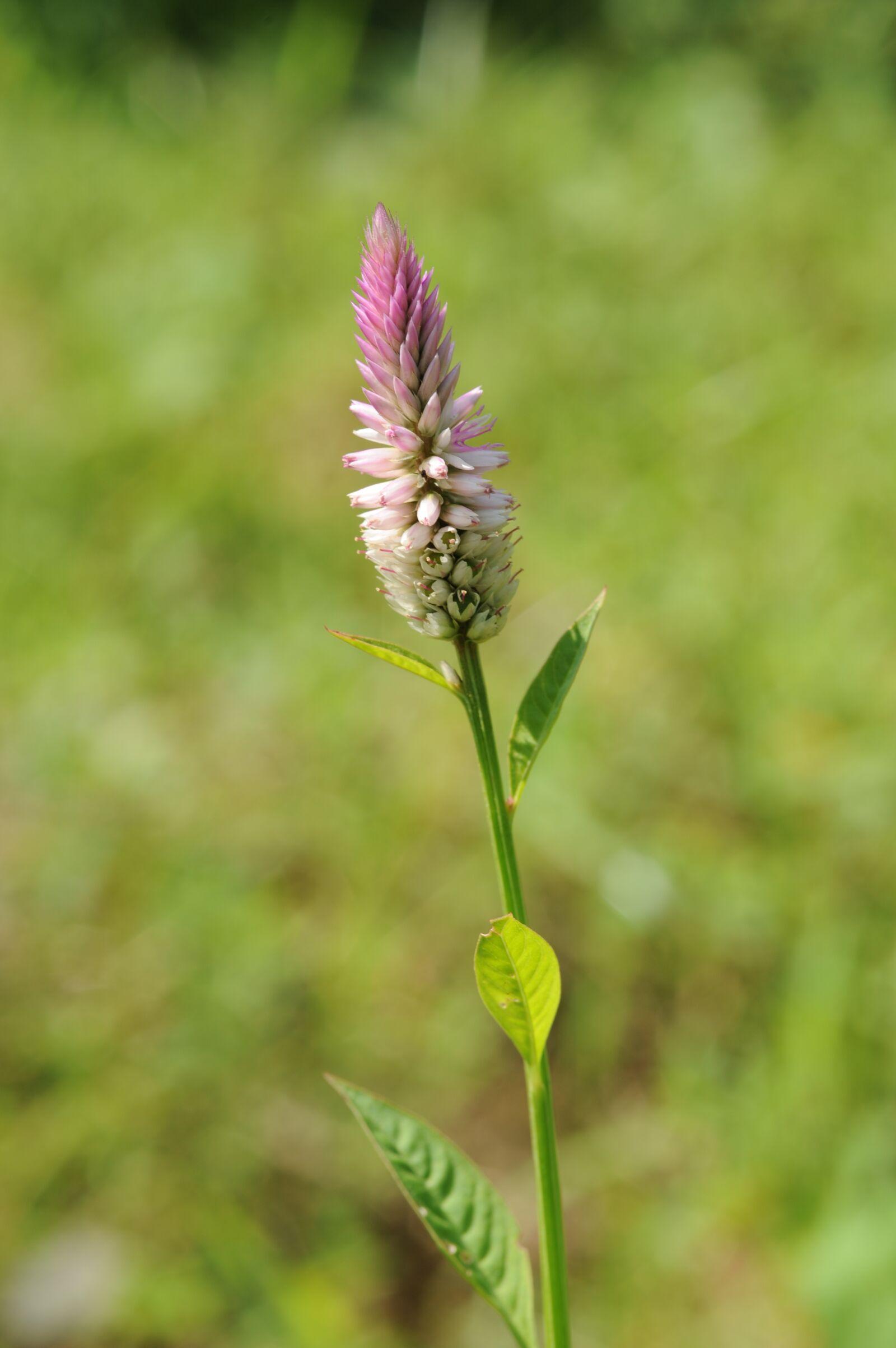 "Nikon D700 sample photo. ""Plant, flowers, green"" photography"