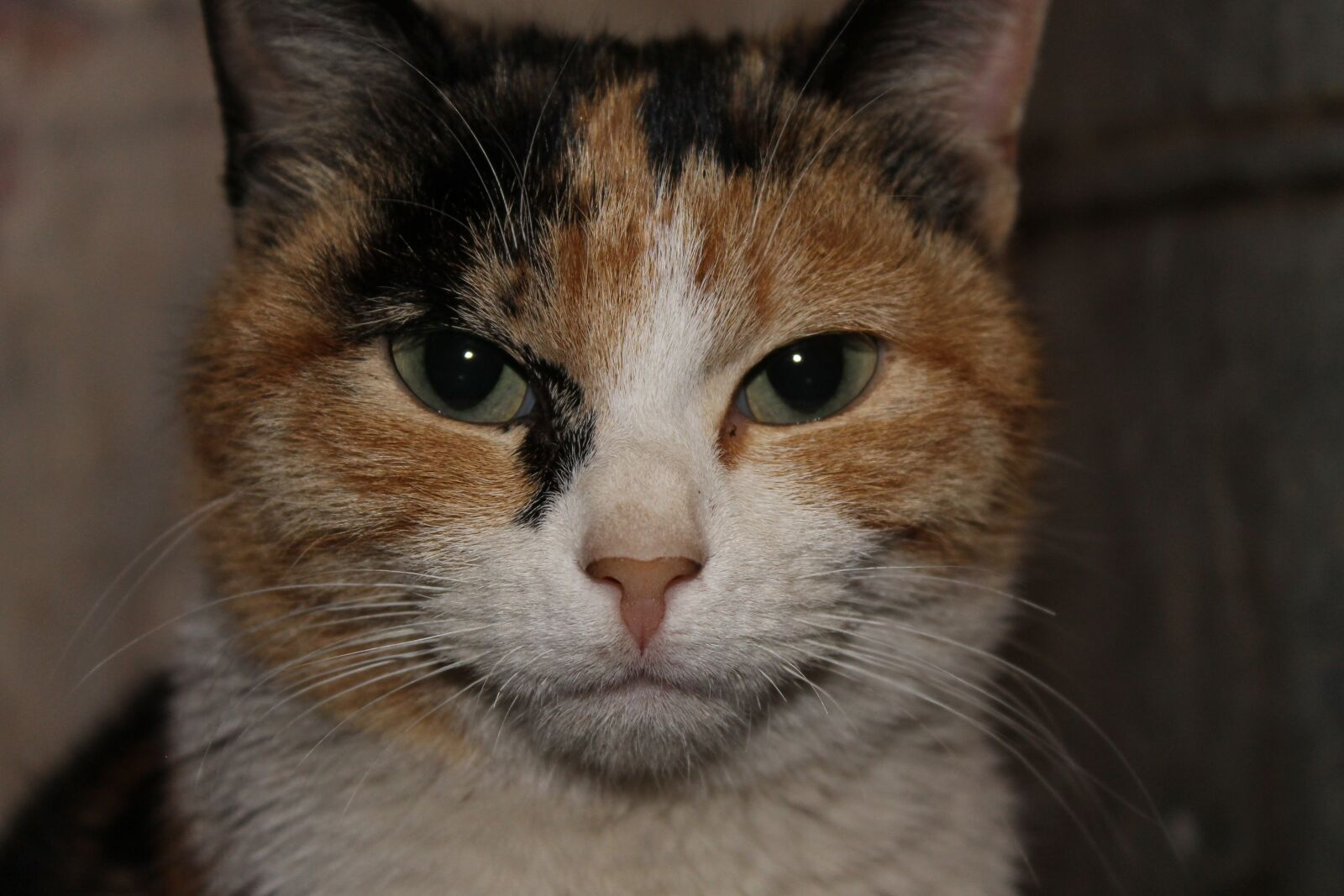 "Canon EOS 1100D (EOS Rebel T3 / EOS Kiss X50) sample photo. ""Cat, кошка, pet"" photography"