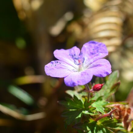 flowers, mountain, mt amakazari, Nikon 1 V2