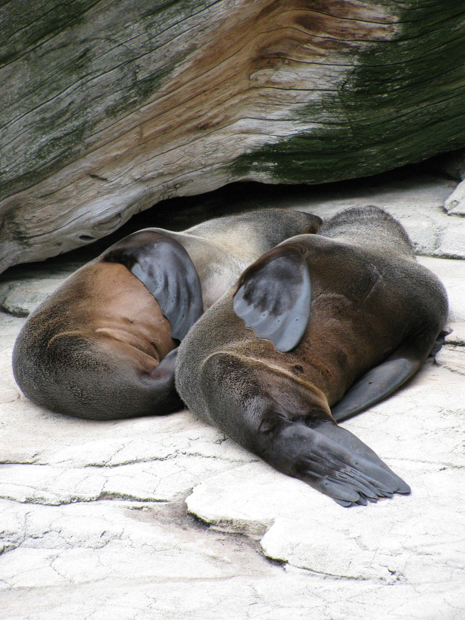 "Canon PowerShot SX110 IS sample photo. ""Sea lions, zoo, marine"" photography"