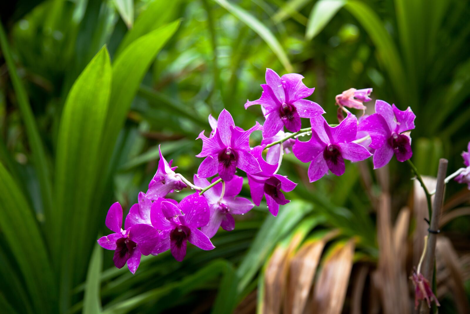 flower, purple, orchids, Canon EOS 5D MARK II, Canon EF 24-105mm f/4L IS