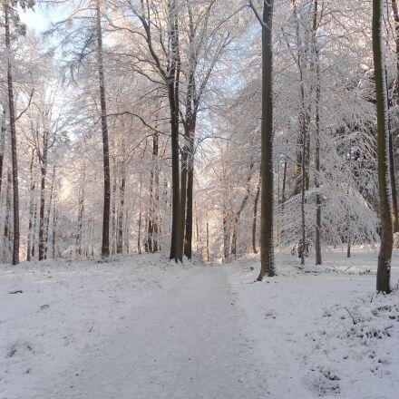 winter, forest, snow, Sony DSC-W510