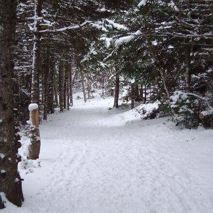 snow, winter, frost, Sony DSC-W120