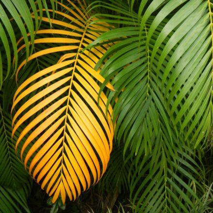 leaf, multiplying, tropical, Nikon COOLPIX AW100