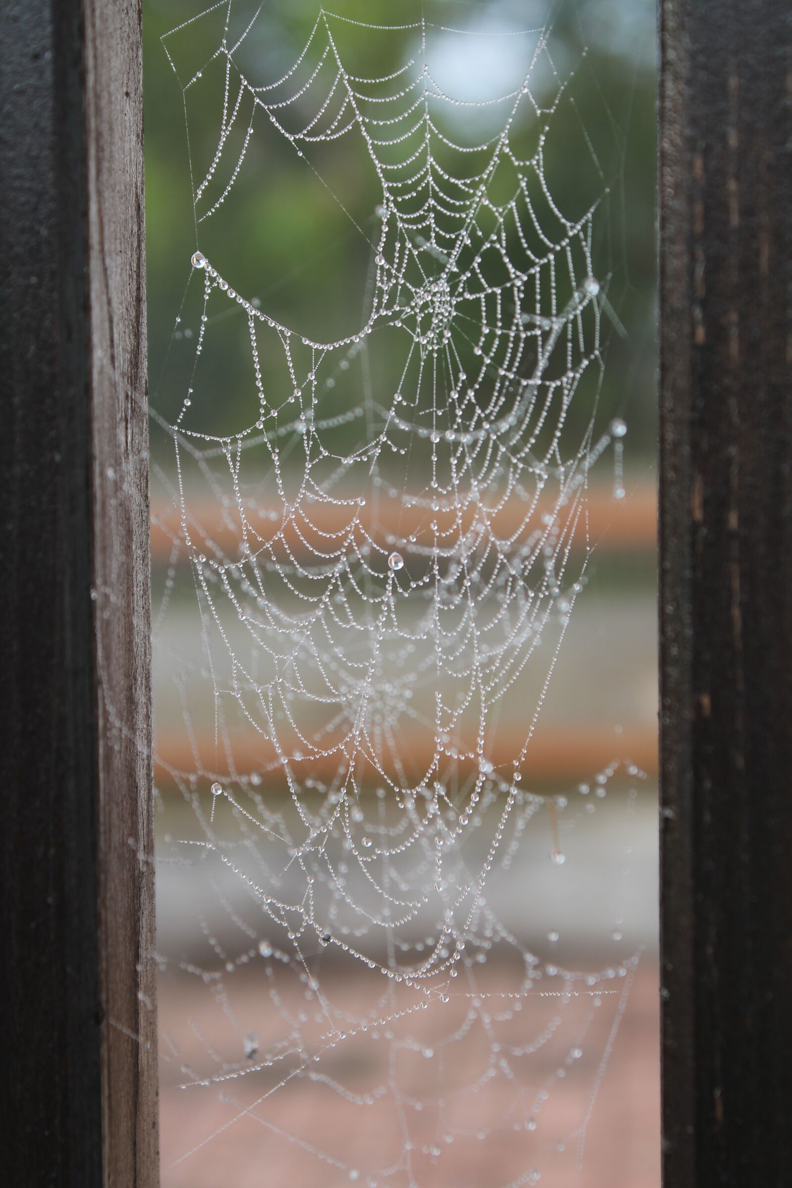 "Canon EOS 1100D (EOS Rebel T3 / EOS Kiss X50) sample photo. ""Cobweb, web, fence"" photography"