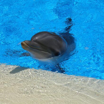 dolphin, mammal, water, Sony DSC-V3
