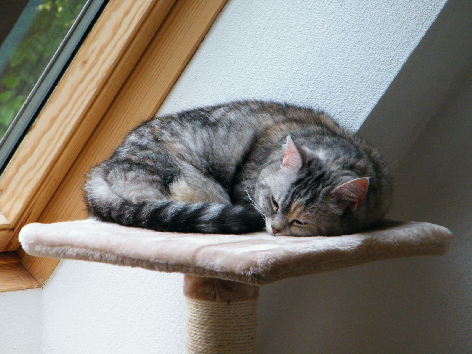 "Fujifilm FinePix S2000HD sample photo. ""Cat, domestic cat, pet"" photography"