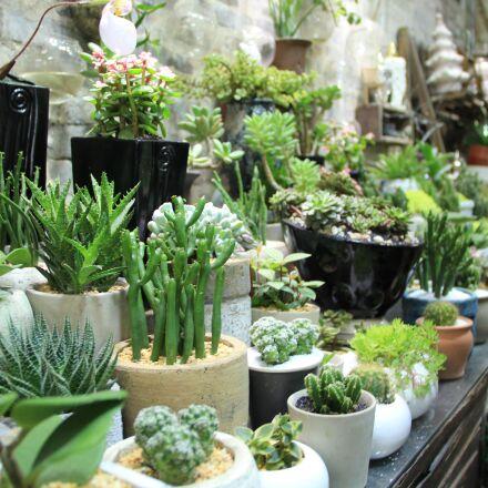 plant, green, fresh, Canon EOS 60D