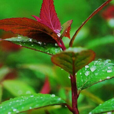 drops, leaves, rain, Fujifilm X-T1