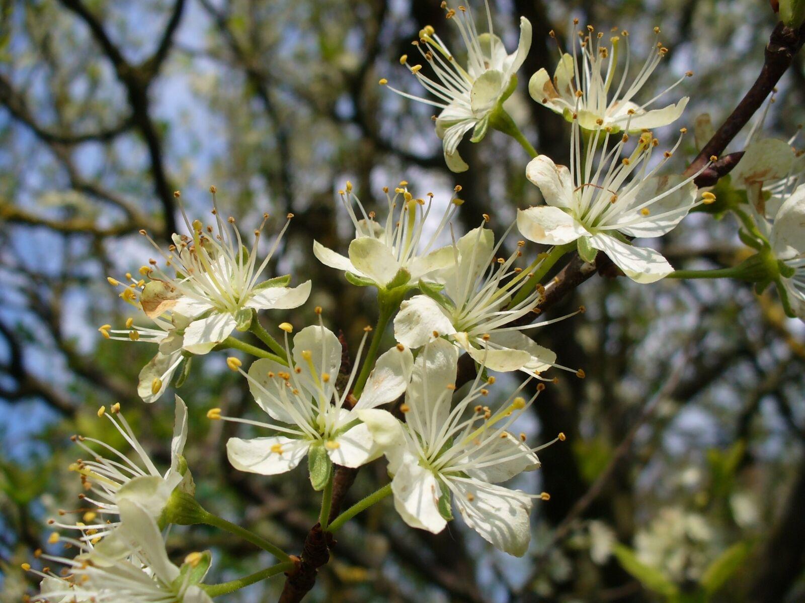 "Panasonic DMC-LZ1 sample photo. ""Blossom, spring, nature"" photography"