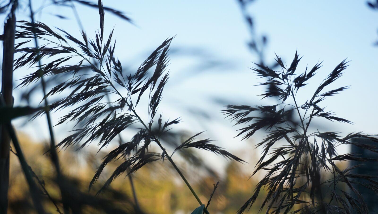 "Sony a6000 sample photo. ""Mood, autumn, grasses"" photography"
