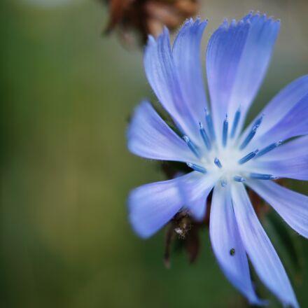 flower, Sony SLT-A58