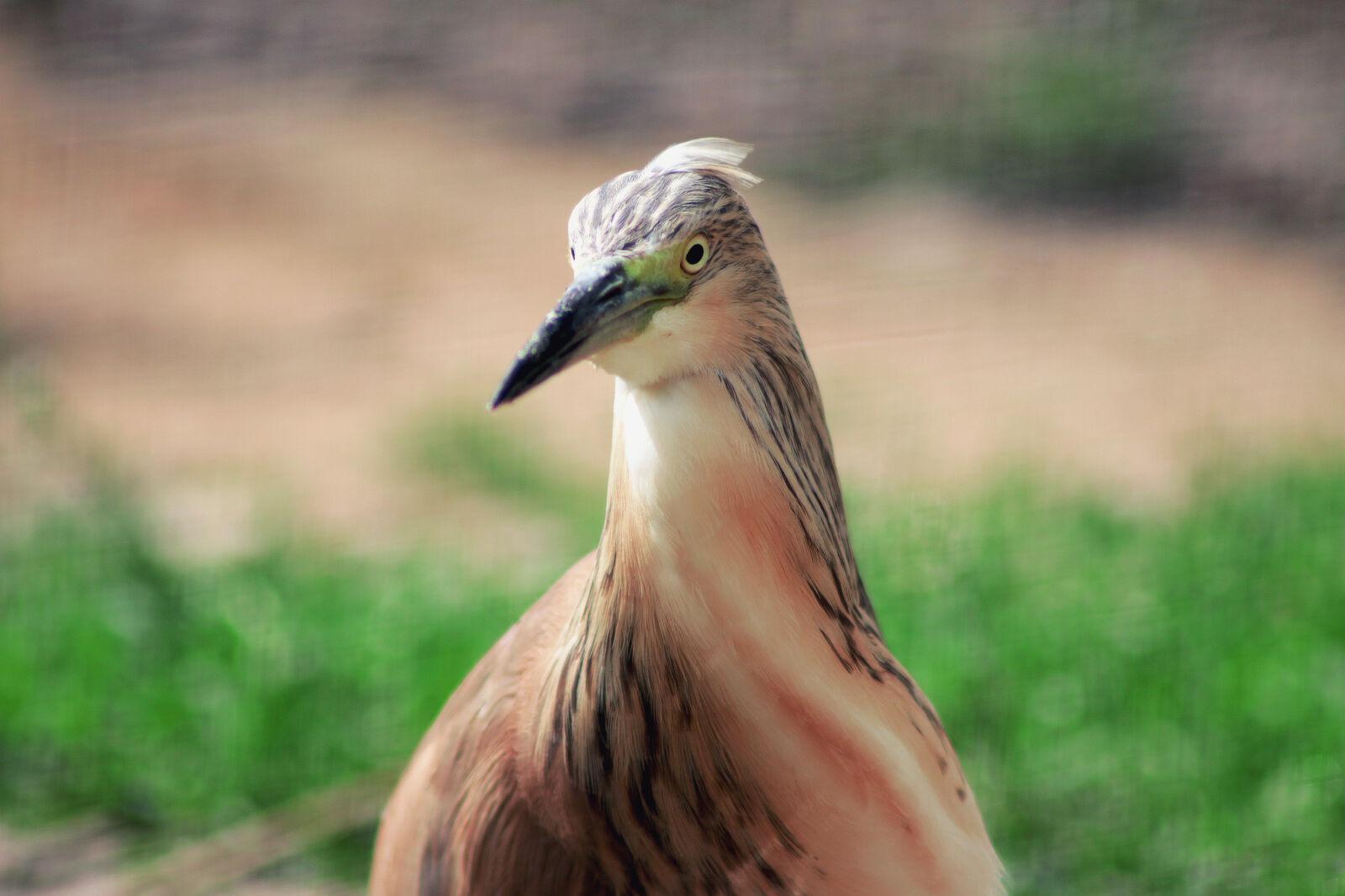 animal, beak, bird photography