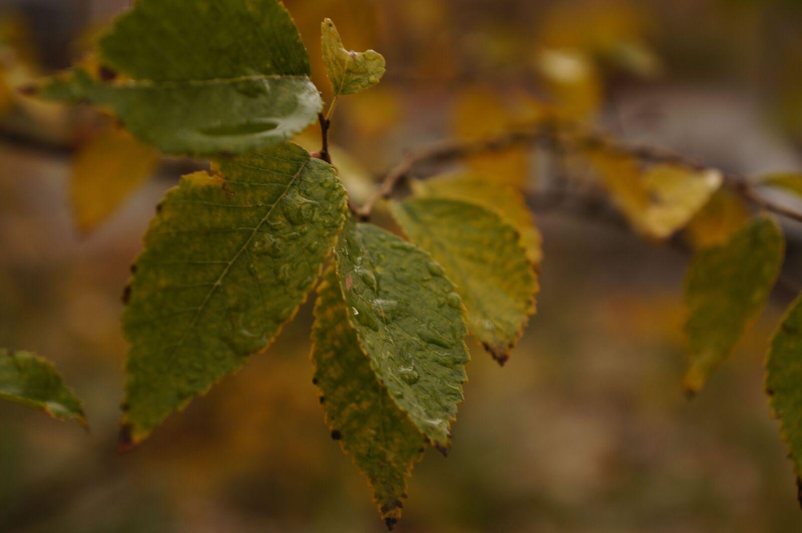 autumn, leaves, yellow
