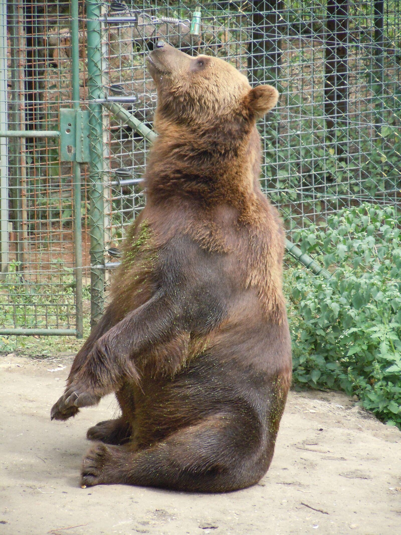 "Nikon Coolpix S8000 sample photo. ""Bear, zoo, mammal"" photography"