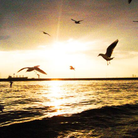 seagulls, Panasonic DMC-LS2