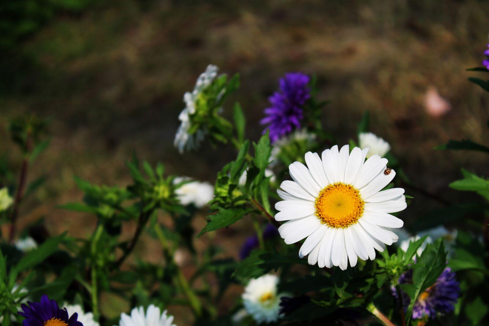 "Canon EOS 1100D (EOS Rebel T3 / EOS Kiss X50) sample photo. ""Flower, white, grass"" photography"