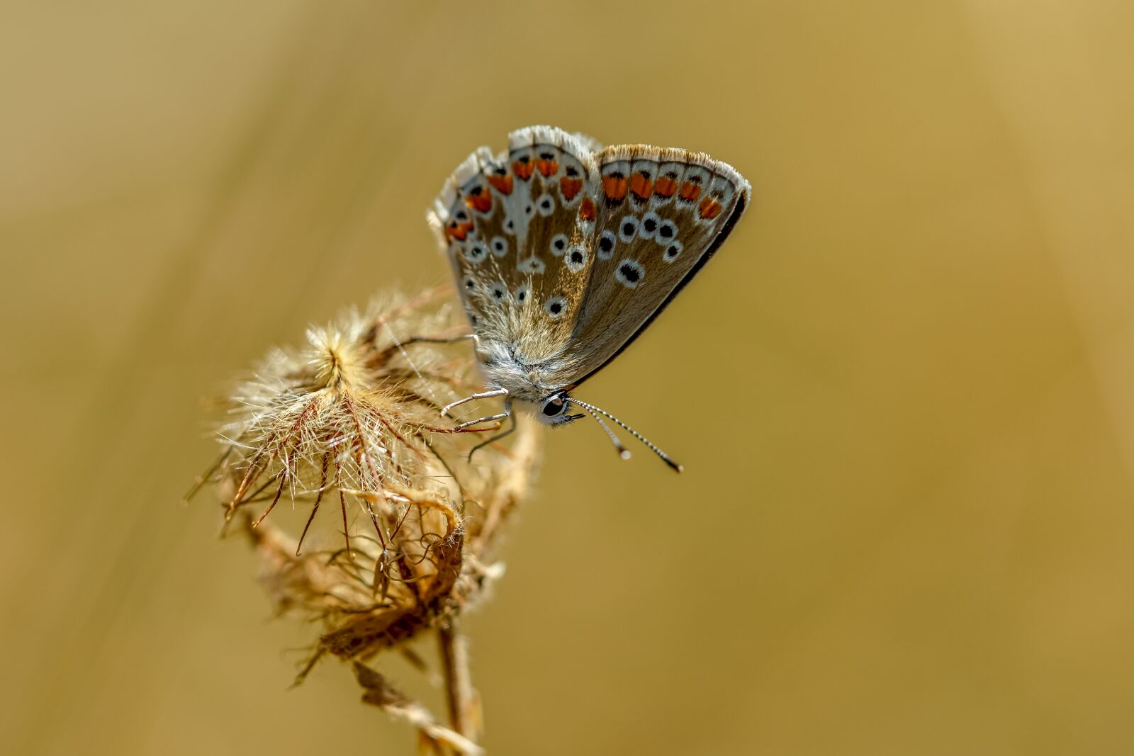 """Sony a6000 sample photo. """"Butterfly, blue, macro"""" photography"""