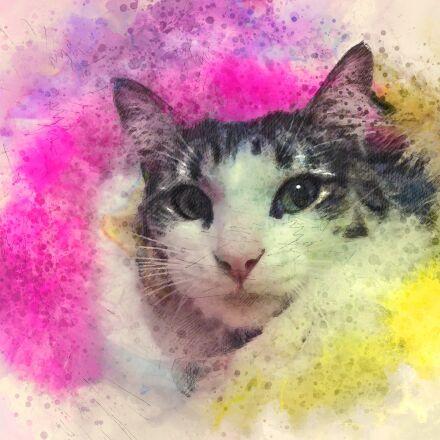 cute, art, cat, Apple iPad Air