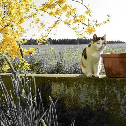 cat, mieze, pet, Nikon 1 S1