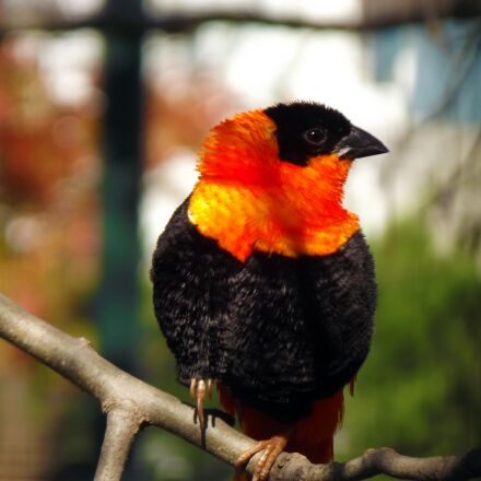 the loom, bird, orange, Fujifilm FinePix S2980