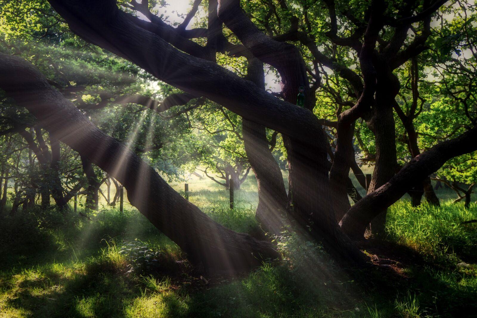 "Sony a6500 sample photo. ""Coastal forest, light, flooded"" photography"