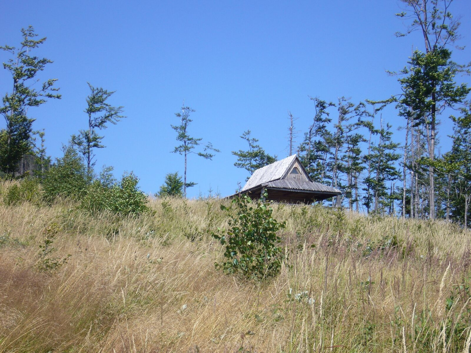 hut, meadow, forest