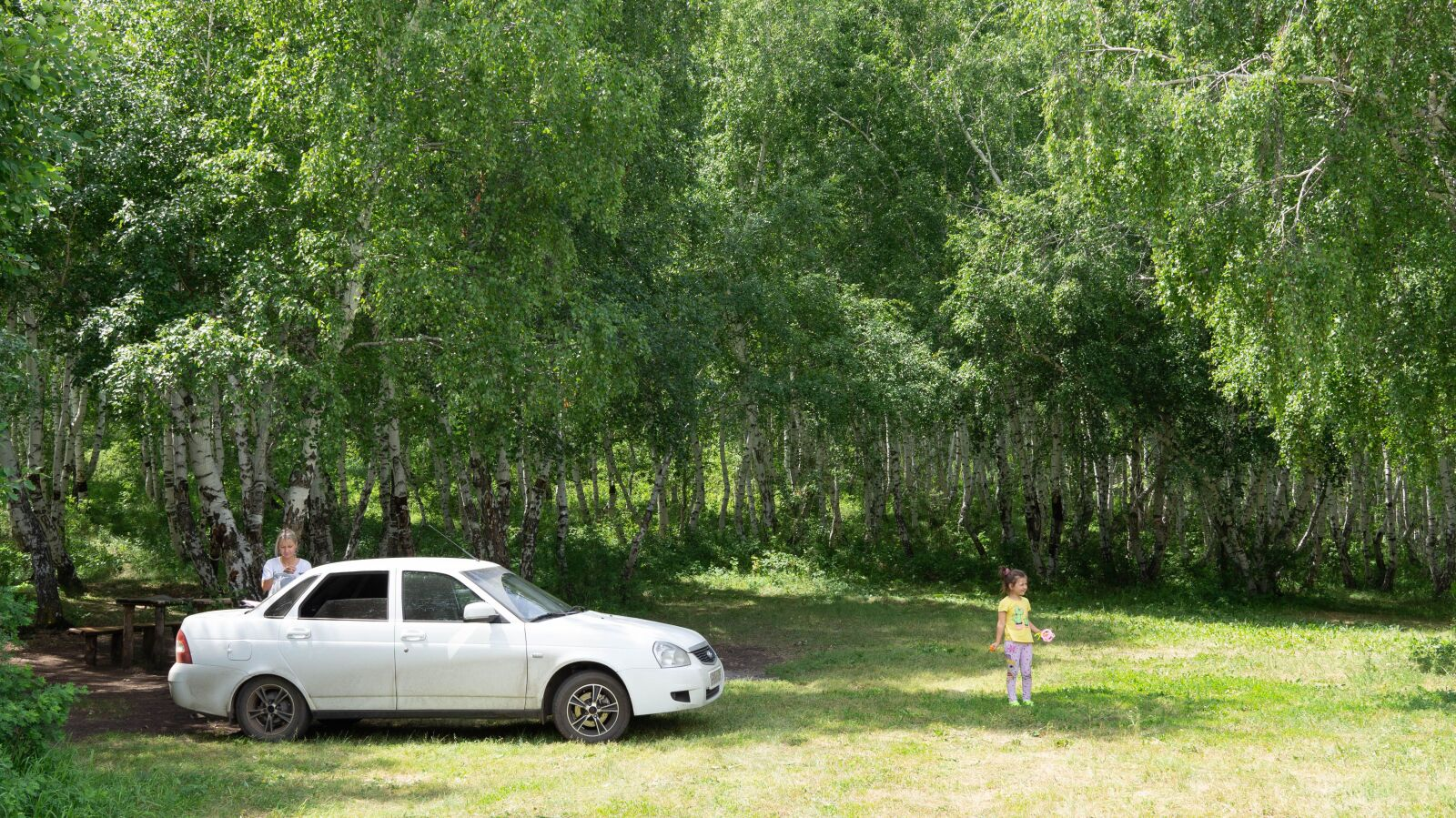 forest, auto, nature