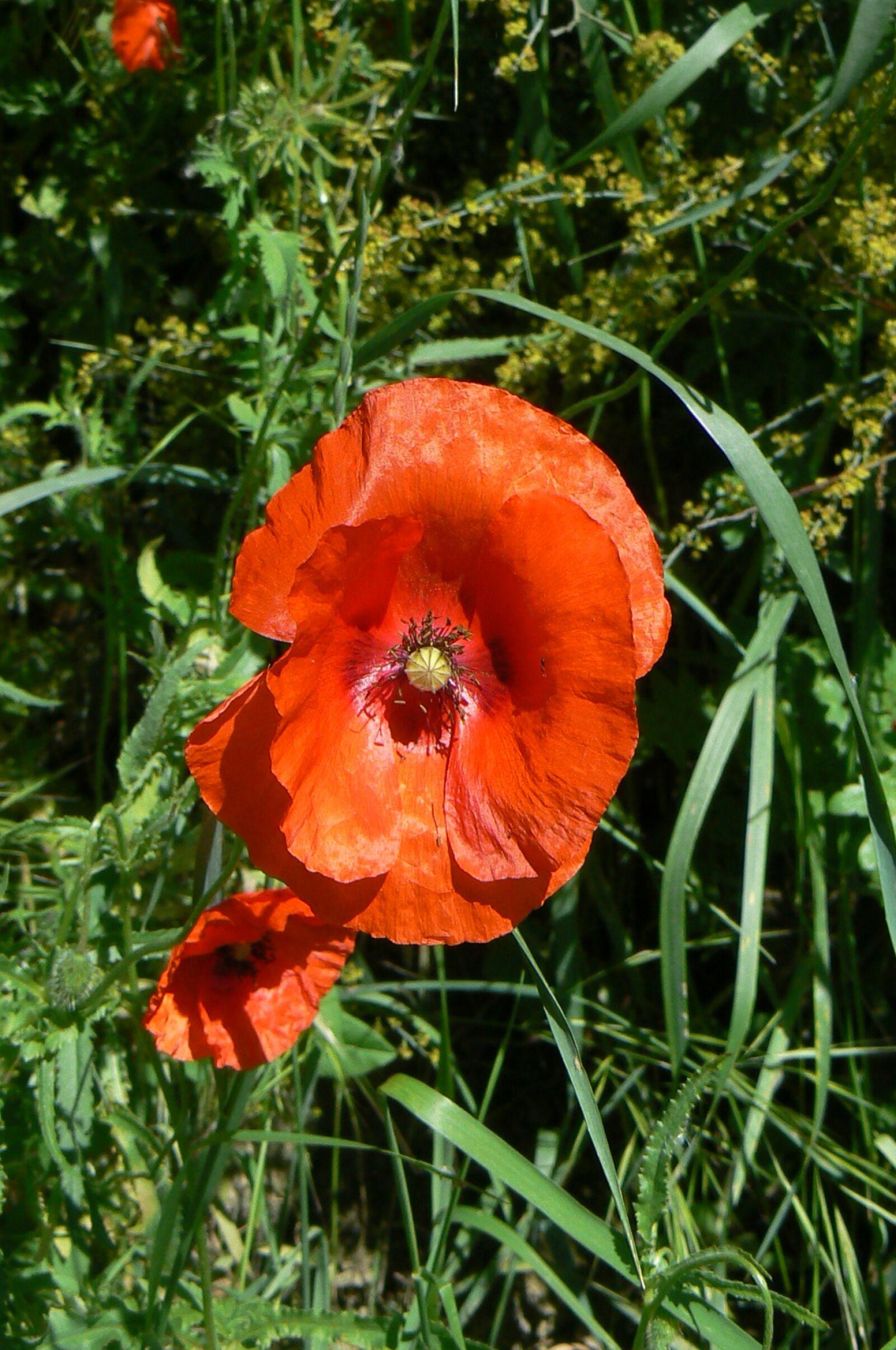 "Panasonic DMC-FZ7 sample photo. ""Flower, nature, flora"" photography"